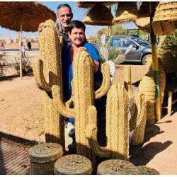 Le cactus Dalton moyen modèle